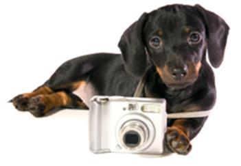 Skype Doggie Cam
