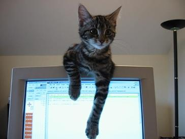 learning English online, cat on computer