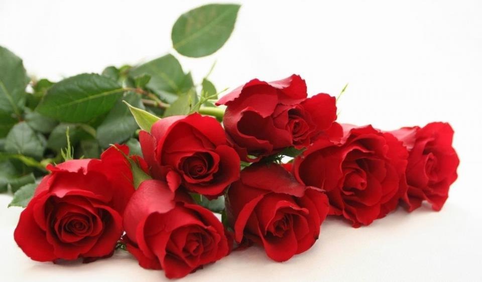 Rose day whatsapp and Facebook status messages