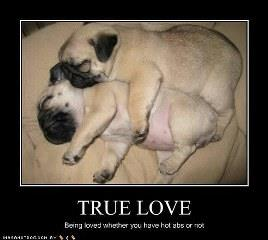 True love animals display picture for whatsapp