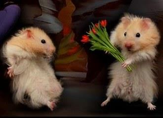 Cute funny animals proposing Love