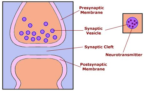 neurotransmitter dopamine