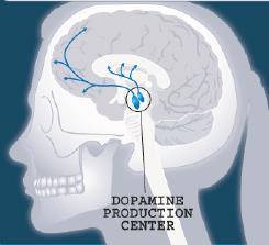 dopamine production center